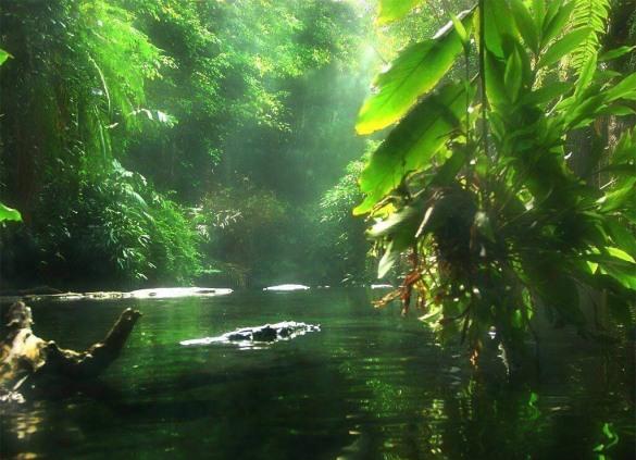 Amazônia1