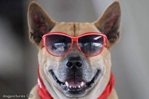 Very_Cool_Dog